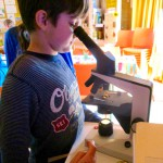 Offenes Haus: Forschen in der Bienen-InfoWabe Bamberg