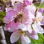 24-Teile-Puzzle aus selbsterstelltem Bienenfoto
