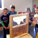 Schaufensterbeute im Schulbienenunterricht