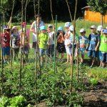 Schüler erhalten Schulbienenunterricht im Interkulturellen Garten