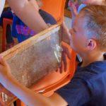 Honigwabe –Halt mal und riech!