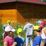 Wir entdecken die Wiese! Schulbienenunterricht für die Lichteneiche-Klasse 1a in der Bienen-InfoWabe