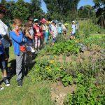 Ohne Bienen kein Obst und Gemüse! Schulbienenunterricht für die Lichteneiche-Klasse 1a in der Bienen-InfoWabe