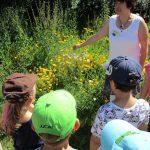 Schulbienenunterricht an der Mini-Bienenweide. Die Lichteneiche-Klasse 1a in der Bienen-InfoWabe