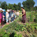 Schulbienenunterricht für die Gundelsheimer Schulklasse 3b, im IKu Garten
