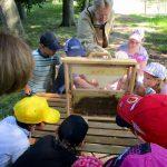 Schaufensterbeute der Bamberger Schulbiene mit der Gundelsheimer Schulklasse 3b