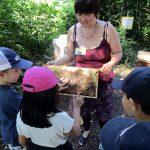 Bienenstreicheln! Am Lehrbienenstand der Bamberger Schulbiene mit der Gundelsheimer Schulklasse 3b