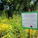 Bienenweideparzelle von Bienen-leben-in-Bamberg.de im IKu Garten
