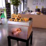 Anschauungsmaterial für den Schulbienenunterricht