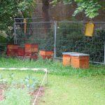 Bienenvölker des Lehrbienenstands Scheßlitz