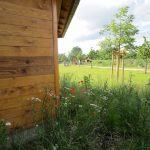 Blühendes an der Bienen-InfoWabe Bamberg