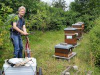 Vor der Ernte der Honigwaben in den Buger Wiesen