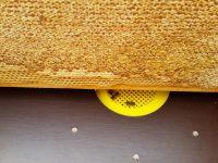 Der Ausgang der Bienenflucht von oben gesehen