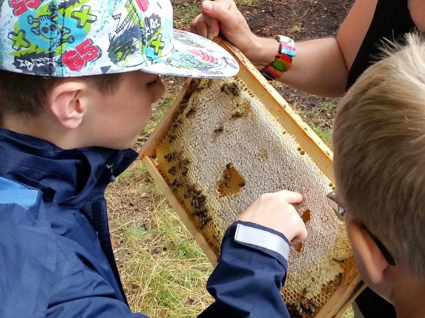 Honig schlecken am Lehrbienenstand im Erba-Park Bamberg