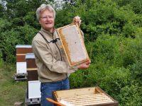 Eine volle, verdeckelte Honigwabe aus Inas Patenvolk
