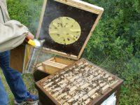 Bienenflucht entfernen nach vollbrachter Ernte in Inas Patenvolk
