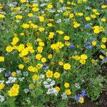 Blumenstreifen im Bioversuchsgelände