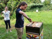 Student zieht Honigwabe