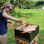 Studentin zieht Honigwabe