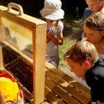 Faszination an der Schaufensterbeute – Schulbienenunterricht für Schüler der Hainschule