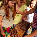 Schüler am Lehrbienenstand im Erba-Park Bamberg