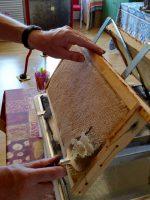 Honigwaben des Standortes Buger Wiesen werden entdeckelt