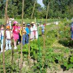 3245-Lichteneiche-1c-Schulbienenunterricht-Garten