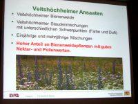 Vortragsfolie @ Barbara Bartsch zu Veitshöchheimer Ansaaten