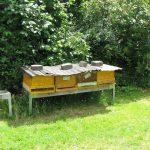 Bienenvölker an der Galgenfuhr
