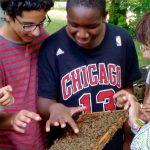 Bienen streicheln; Schulbienenunterricht Heidelsteigschule 7. Klasse in der Bienen-InfoWabe