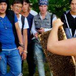 Voll mit Bienen besetzte Wabe