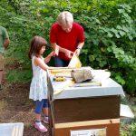 Junge Erntehelferin kehrt Bienen von der Honigwabe ab
