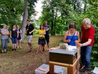Honigerntehelferin lernt den Umgang mit dem Stockmeisel