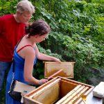 Honigerntehelferin kehrt Bienen ab