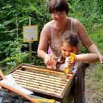 Lola lockert eine Honigwabe mit dem Stockmeisel