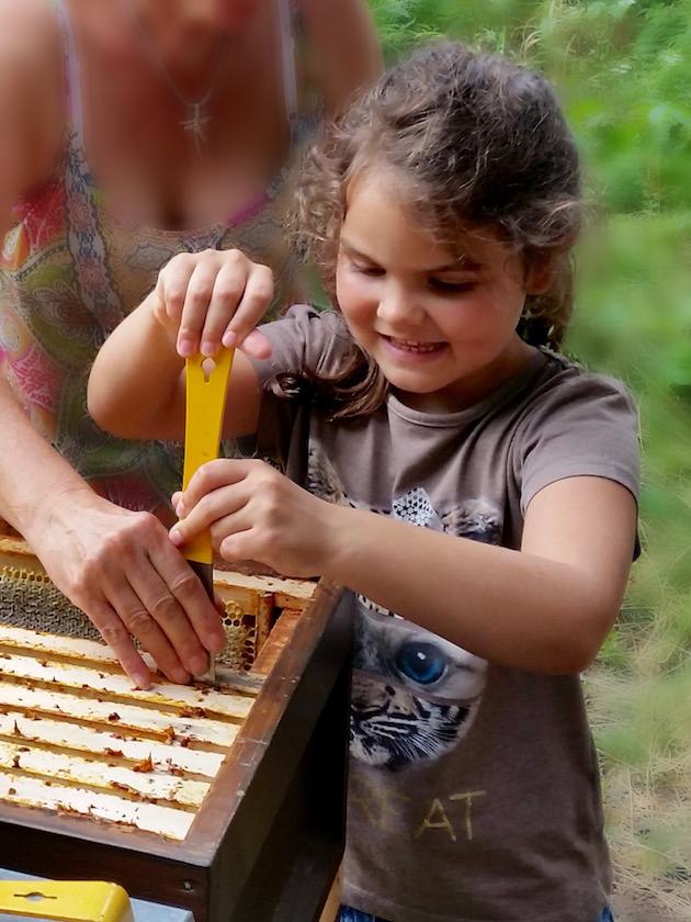 Lola lockert mit dem Stockmeisel eine Honigwabe