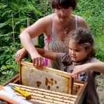 Lola zieht Honigwabe