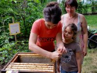 Lena lockert mit dem Stockmeisel eine Honigwabe