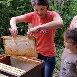 Lena zieht Honigwabe