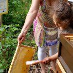 Lola kehrt Bienen ab