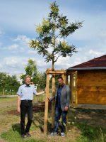 Reinhold Burger und Michael Gerencser mit Koelreuteria