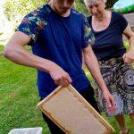 Honigernte am Standort Weide, Bamberg