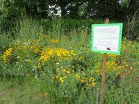 Unsere bienenfreundliche Parzelle im Interkulturellen Garten Bamberg