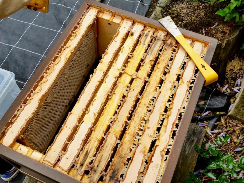 Offener Bienenstock mit Honigwaben