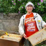 Honigernte Bamberger Lagenhonig