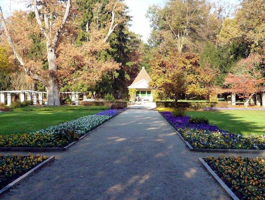 Eiche am 06.11.2011 im Alten Botanischen Garten, Hainpark Bamberg
