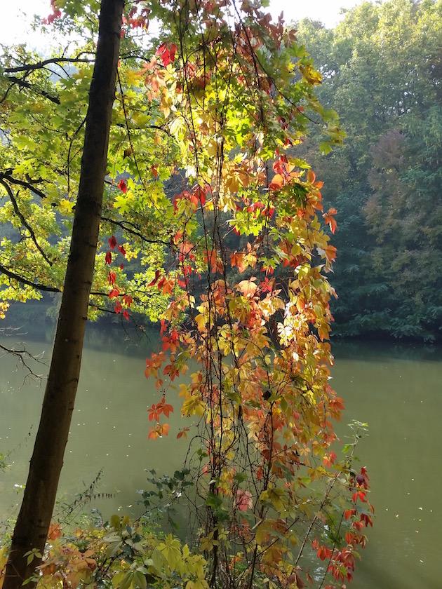 Herbstlaub an der Regnitz im Hainpark Bamberg