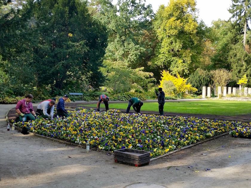 Gärtner bei der Arbeit im Alten Botanischen Garten im Hainpark Bamberg