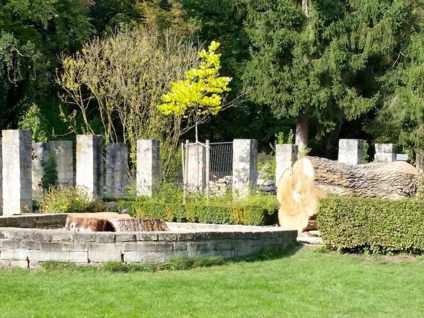 Gefällte Eiche im Alten Botanischen Garten im Hainpark Bamberg