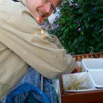 Reinhold bestückt die Behälter mit Stroh als Kletterhilfe
